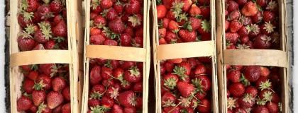 Fragole, fragoline – truskawki, truskaweczki